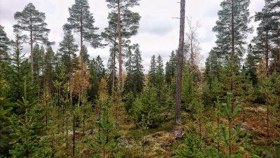 Träd i vägen
