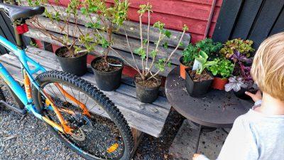 Cykel och buskar och flicka
